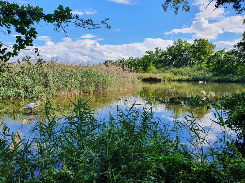 Teichlandschaft Umgebung vom Ferienhof